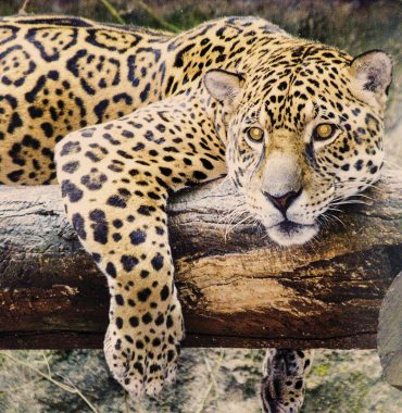 Ilha Solteira Zoo – Wildlife Conservation Center